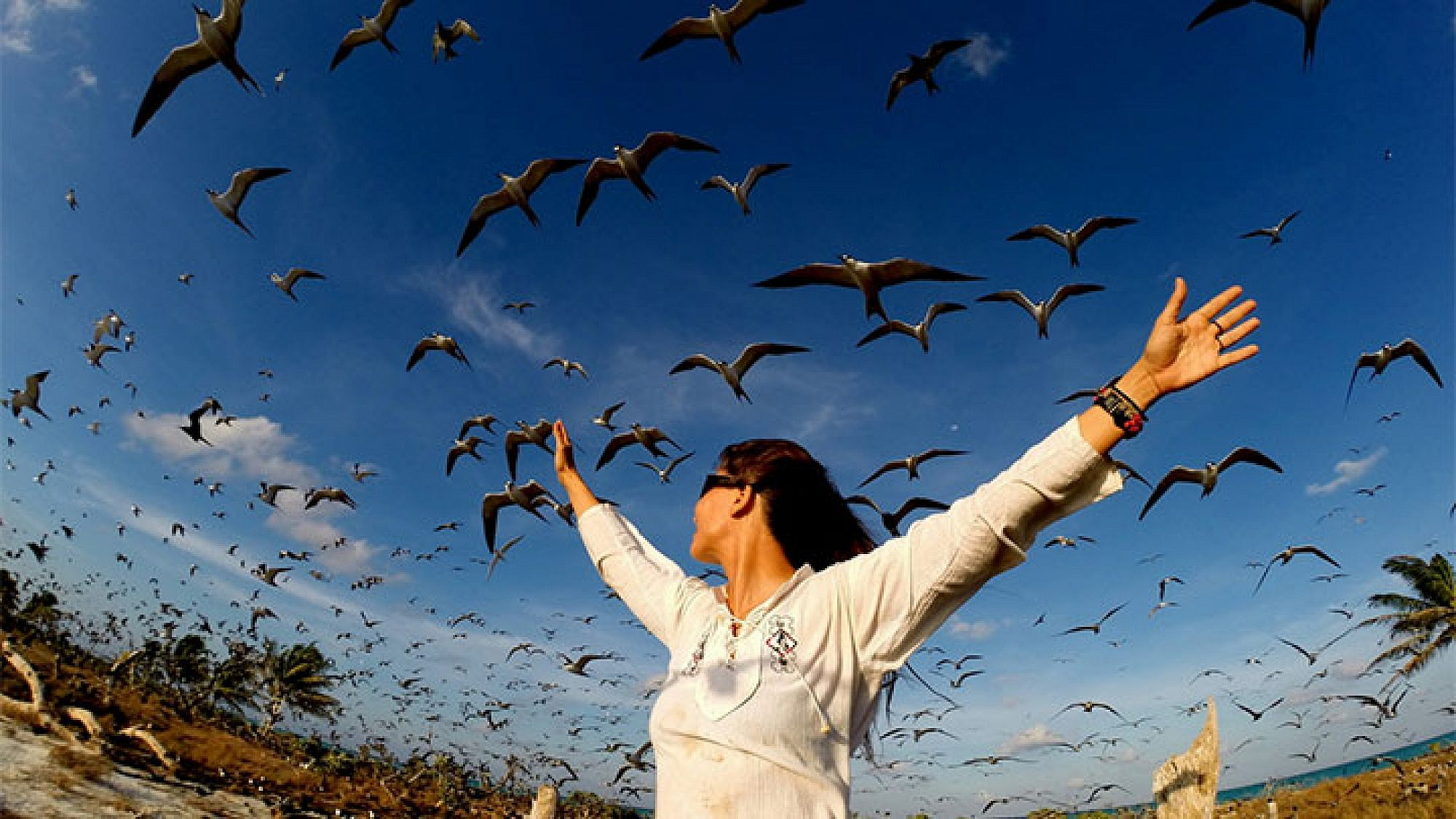 אלפי עופות ים חגו סביבנו וצרחו מלוא גרון. צילום: טניה רמניק ואורן טל