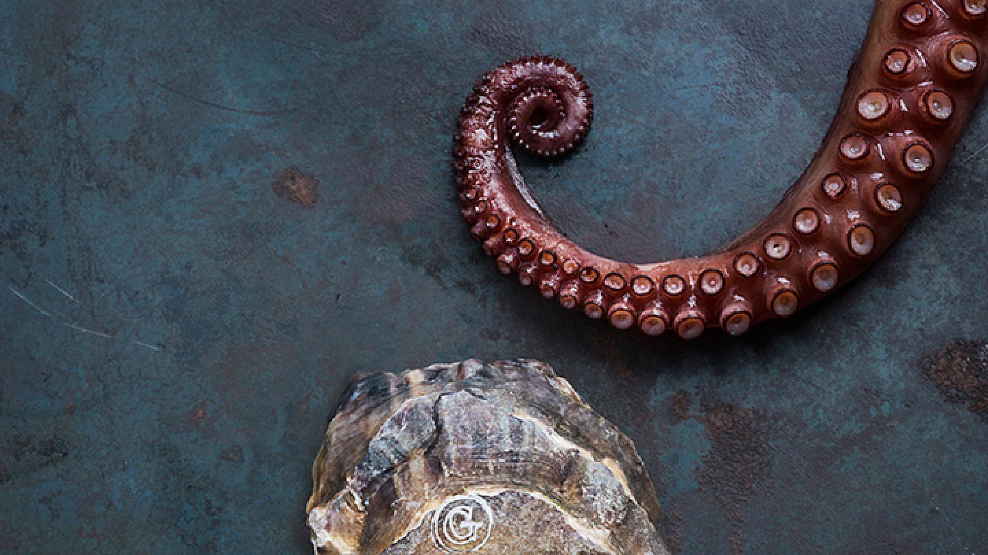 ים של פירות ים | צילום: בן יוסטר