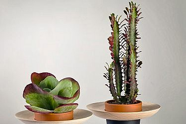 """מתוך סדרת המוצרים New Mexico של המעצב ניר מאירי   צילום: יח""""צ"""