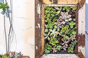 תוצר סופי: סידור סוקולנטים בתוך מסגרת עץ | צילום: אנטולי מיכאלו