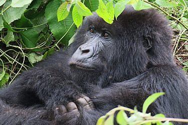 רואנדה | צילום: רויטל חורש