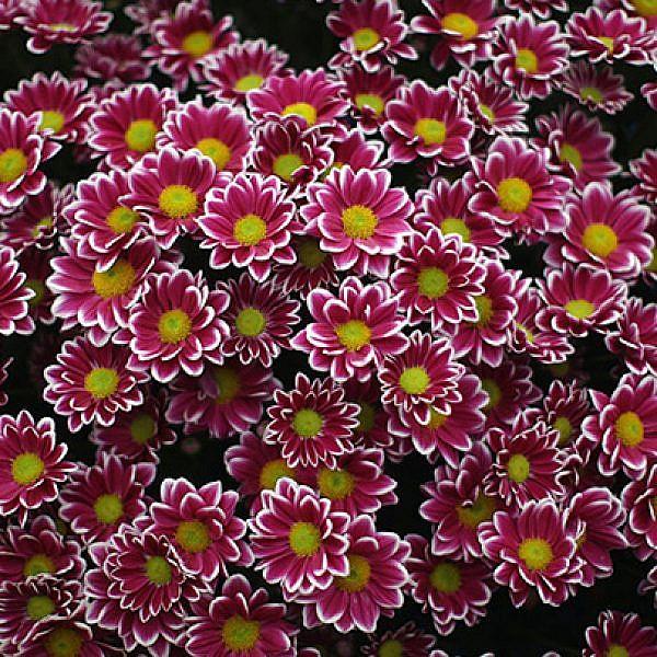 פריחה משקמת לגינה חורפית שמחה | צילום: GettyImages