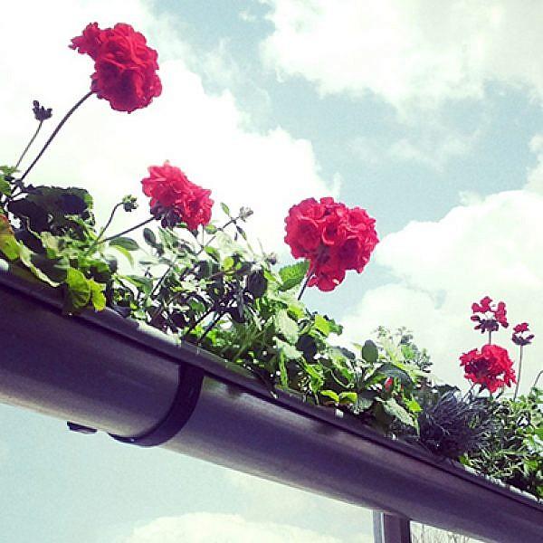גינה ממרזבים היא מה שהמרפסת שלכם צריכה