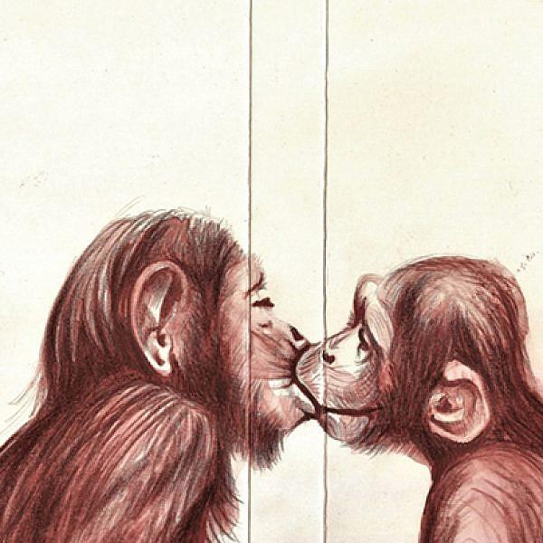 רומי שי, שימפנזים   צבע טרי