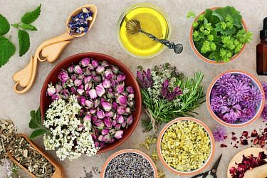 צמחי מרפא שכדאי להכיר | צילום: Shutterstock