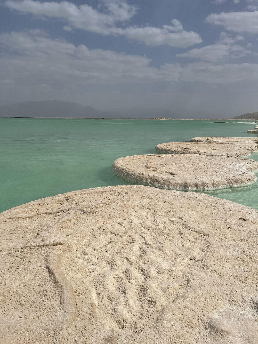 פטריות ים המלח | צילום: קורל חדד