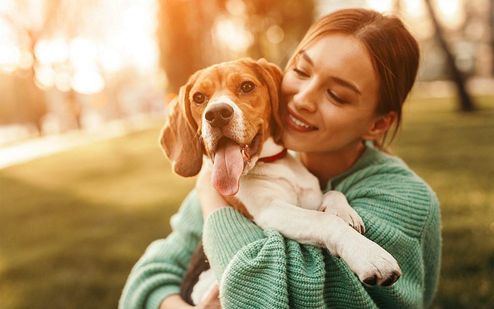 הכירי את הגבולות של הכלב שלך   צילום: Shutterstock